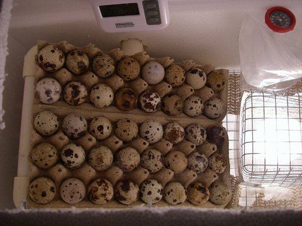 This was during the last hatch - there's the hygrometer at the top!