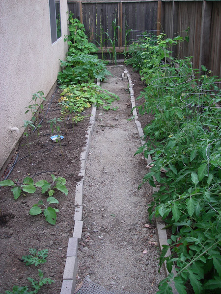 Mostly tomatoes on the right, eggplants, sunflowers, squashes, and cucmbers on the left.
