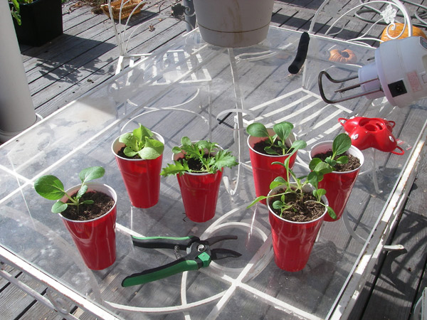 winterseedlings